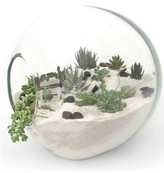 Love how this terrarium looks like an entire landscape. Might try this for next terrarium project. Cactus Terrarium, Mini Terrarium, Fairy Terrarium, Cacti And Succulents, Planting Succulents, Planting Flowers, Succulent Planters, Cactus Plants, Indoor Garden