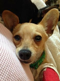 Forgotten Paws Animal Rescue helped Bo find his furever home in 2014! http://www.forgottenpaws.org