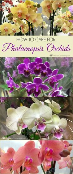 If want to try growing orchids as houseplants, follow these simple orchid plant care instructions, and you'll enjoy your blooming orchid for years to come!