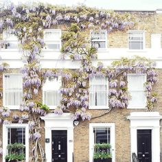 wisteria covered townhouses // my favorite
