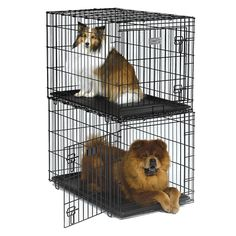 Solutions Stackable Folding Wire Dog Crate
