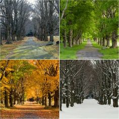 Northern Maine seasons