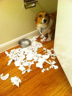 This is exactly the way our dogs act when they know they were bad.  So funny.