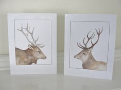 Deer and Elk All Occasion Cards Brown Animal Natural History Illustrations Birthday Cards for Men and Boys Thank You Cards Set of 2