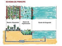 Le principe de la piscine naturelle                                                                                                                                                                                 Plus