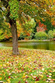 Autumn colour - Things to Do in the Southern Highlands, Australia - The Trusted Traveller