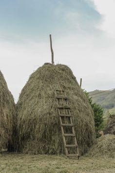 Vara de Hierba lista para el invierno #Asturias #guardianes del Paraiso Naturaleza y Paisajes del Paraiso Comarca de La Sidra