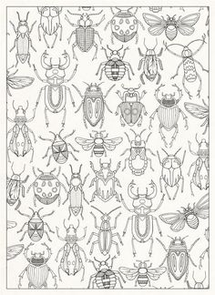 Containing 20 detachable postcards of Johanna Basford's beautiful drawings from the inky world of her Secret Garden. Bug Coloring Pages, Coloring Books, Pattern Coloring Pages, Bug Art, Insect Art, Bugs And Insects, Art Plastique, Art Lessons, Doodles
