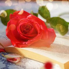 Romantic Literary Valentine's Day Gifts for Every Stage of Your Relationship Royalty Free Images, Valentine Day Gifts, Relationship, Romantic, Stock Photos, Stage, Jewelry, Jewels, Copyright Free Images