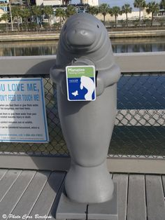 Tampa Electric Company Manatee Viewing Center, Apollo Beach. Manatees aggregate here between the months of Nov-March using the warm water outflow from the power plant when the temperature in the gulf drops below 68F. The center is open Nov 1st - Apr 15th. http://www.tampaelectric.com/company/mvc/