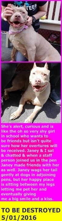 SAFE 5-1-2016 by Pound Hounds Res-Q --- Manhattan Center JANEY – A1070555 **SAFER: EXPERIENCED/NO CHILDREN** FEMALE, GRAY, PIT BULL MIX, 4 yrs STRAY – STRAY WAIT, NO HOLD Reason STRAY Intake condition INJ MINOR Intake Date 04/17/2016 http://nycdogs.urgentpodr.org/janey-a1070555/