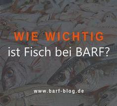 Tatzen Streng Schild Vorsicht 15x20-40x60cm Hund GüNstigster Preis Von Unserer Website Der Nächste
