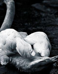 Fine art animal photography black and white nature by kellya