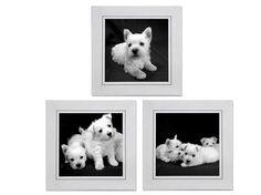 Westies Cards Set of 3 Westie Puppies Square by denisebruchman
