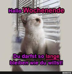 1000+ ideas about Wochenende Lustig on Pinterest | Endlich Wochenende, Funny Postcards and T ...