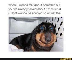dog, doggo, quiet