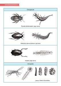 Światowy Dzień Rzek – pakiet edukacyjny Insects, Bee, Animals, Honey Bees, Animales, Animaux, Bees, Animal, Animais