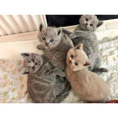 """From @with three cats: """"For all positive feelings and emotions 😍 Please follow us 😻"""" #catsofinstagram #instagood #animal #tagforlikes #F4F"""