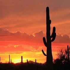 Desert flame apache junction az