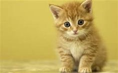 cute kittens - - Yahoo Image Search Results