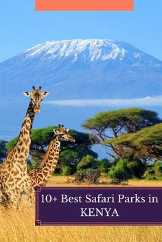Dreaming of an African safari? Here are 10 of the best parks in Kenya so you can get a variety of wildlife! Kenya Travel, African Safari, Where To Go, Places To See, The Good Place, Parks, Wildlife, Challenges, Country