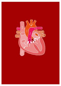 emmajhardy: Diagram of heart, I'm working on a zine all about the human body & anatomy, this is a little peek of the style.