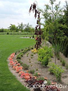 Zielonej ogrodniczki marzenie o zielonym ogrodzie - strona 690 - Forum ogrodnicze - Ogrodowisko
