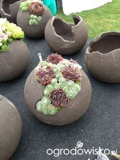 #garden Cement, Garden Projects, Pergola, Plants, Balloons, Succulents, Entryway, Entrance, Appetizer