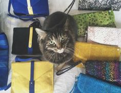 Everything but the cat! Everything, Behind The Scenes, Daughter, Backpacks, Tote Bag, Cats, Gatos, Kitty Cats, Carry Bag