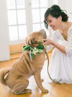 Pup ring bearer