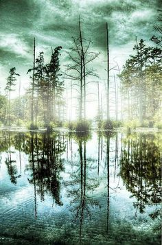 Foggy Forest Reflection