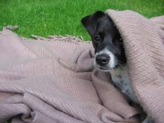 Hundetrick: Sich selbst zudecken
