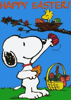 Happy Easter - Snoopy aa the Easter Beagle Delivering Easter Eggs to Woodstock at His Nest Peanuts Images, Snoopy Images, Snoopy Et Woodstock, Snoopy Love, Easter Bunny Images, Easter Pictures, Funny Pictures, Snoopy Cartoon, Peanuts Cartoon