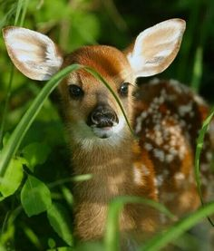 Such a sweet new baby fawn!