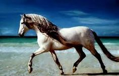 cayuse horse
