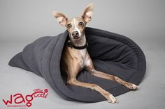 Lavish Pet Lounging - Cuddly Blankies & Beds For Your Pets Cat Food, Buy Shoes, Fleas, Snuggles, Warm And Cozy, Boston Terrier, Your Pet, Kitty, Man Shop