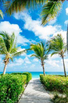 #marin #palmtrees #lovinglife