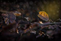 Warm autumn light by Reinhard Mittermaier on 500px