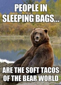 Image result for animals eat tacos too