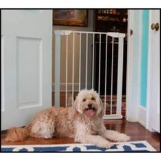 Shop for Cardinal Extra Tall Premium Pressure Gate. Get free delivery On EVERYTHING* Overstock - Your Online Dog Supplies Store! Pet Gate, Dog Gates, Cat Throwing Up, Pet Camera, Dog Whisperer, Pet Dogs, Pets, Cat Pee, Dog Anxiety