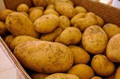 jual kentang - Siapa yang suka makan kentang? Salah satu buah yang mengandung karbohidrat ini memang menjadi alternatif makanan pengenyang selain nasi di kala lapar. Kentang memiliki bentuk fisik yang bulat atau lonjong disertai warna kulit dan buahnya yang kuning. Kentang sendiri bisa dikonsumsi dengan cara direbus atau dicampurkan dalam berbagai sayuran yang bisa