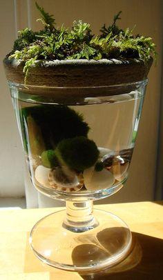 Moss on Top Marimo Balls Unique Mini Terrarium by MyZen on Etsy, $22.99