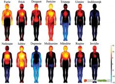 Cum se previne şi cum se combate mana roşiilor | Paradis Verde Human Emotions, Negative Emotions, Heat Map, Different Emotions, Jealousy, Human Body, Affirmations, Stress, How Are You Feeling