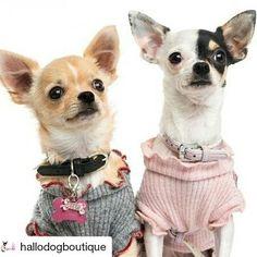 Una nuova attività si è iscritta su #BauSocial: @hallodogboutique ... Grandiose novità molto presto!!  #lovepets #petlovers #petsoninstagram #pets #petinstagram #dog #dogsofinstagram #dogs #instadog #instapet #pet #petsofig #ilovemydog #mydogs #mydog #lovedog #dog #cane #cani #chihuahuasofinstagram #chihuahuastagram #chihuahuas #chihuahualove #chihuahua #hallodogboutique
