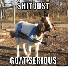 Gallery For > Baby Goats In Sweaters Funny Animal Memes, Funny Animals, Funny Memes, Funny Humour, Memes Humour, Animal Humour, Animal Funnies, Funny Captions, Funny Sayings