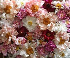 by Amy Merrick, via Flickr
