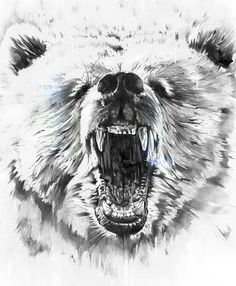 bear by alexis marcou