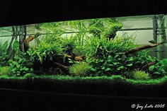 ... with Luis Navarro, March 2004 - Library - Aquatic Plant Central