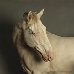 © Marie Cecile Thijs, Horse with the Blue Eyes