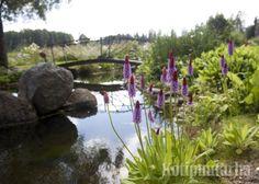 Oma lampi on monen unelma. Vesi on puutarhan rauhoittavimpia elementtejä ja oiva tapa lisätä luonnon monimuotoisuutta omassa puutarhassa. www.kotipuutarha.fi